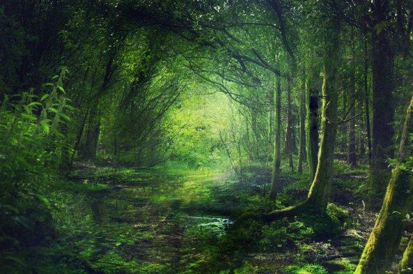 fairy_forest_by_phatpuppyart-d4ptggw